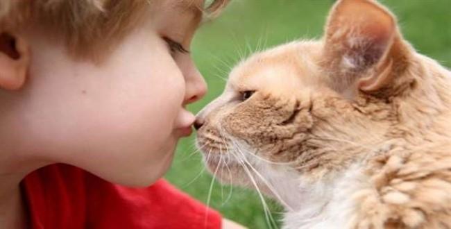 kedi korkusu, hayvan fobisi
